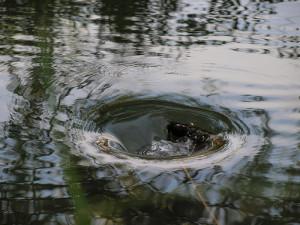 Abfluss im Teich von Robert Verzo