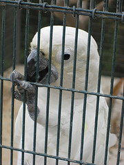 White parrot - Paphos (Pafos) Bird and Animal Park (Pafos Zoo), Cyprus by Glen Bowman (flickr)